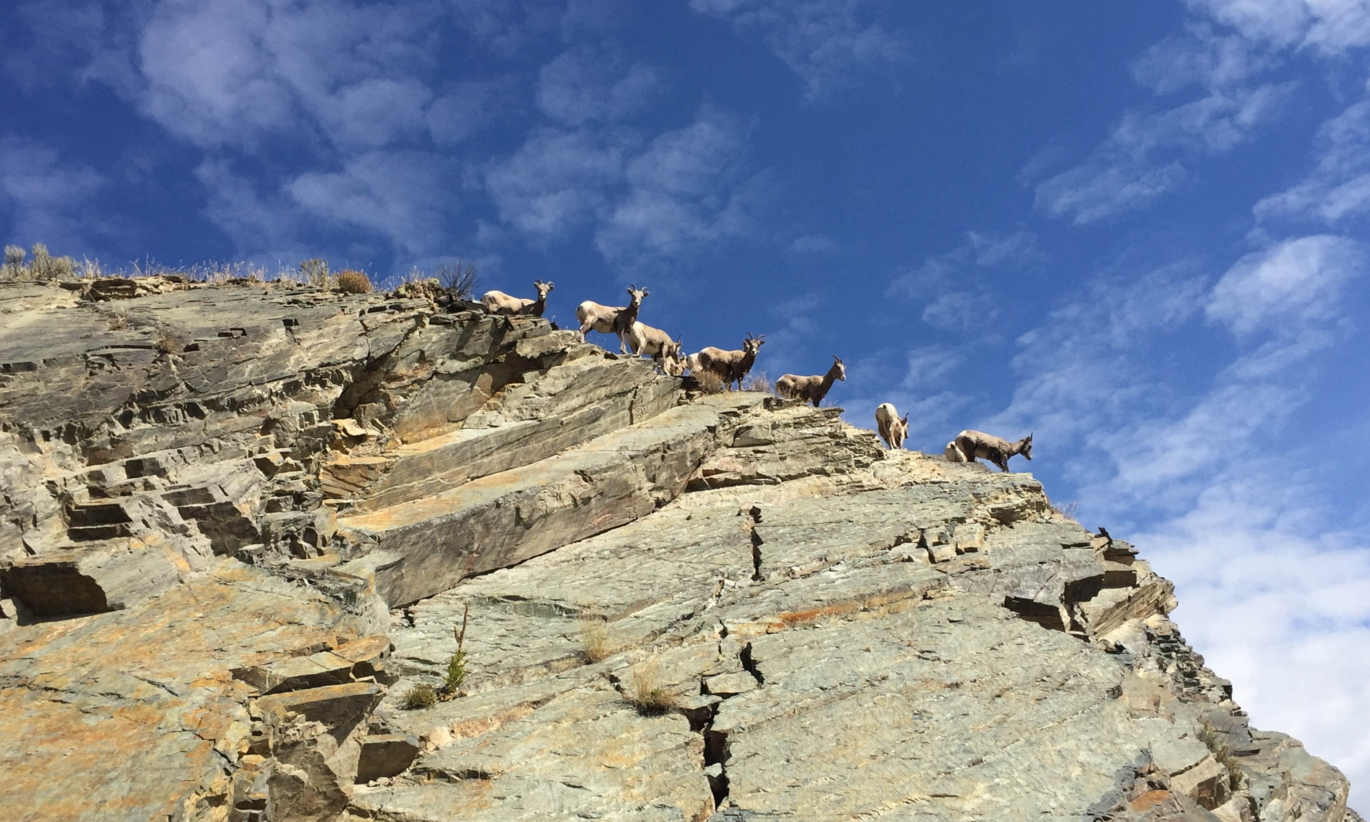 Image looking up at a rocky crag with 9 mountain sheep and blue sky above